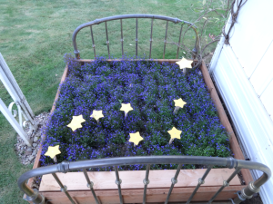 "The Alaska flag in Michael Orelove's ""flower bed"".  The blue flowers are lobelia, (""Crystal Palace""); the second star is correctly depicted as a multiple-star system."