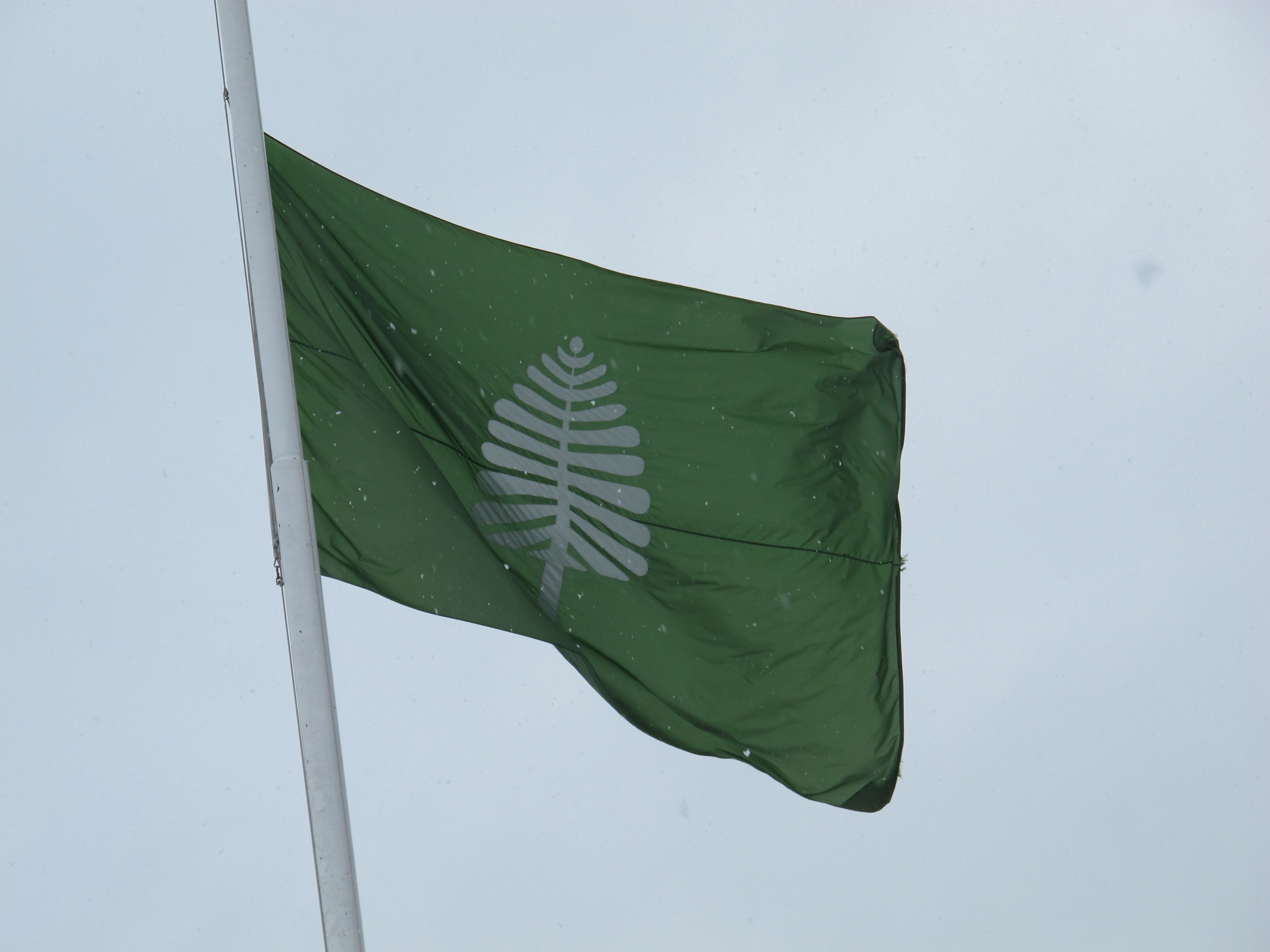 Flag of the kings of gondor from tolkein s mythos the tree is the